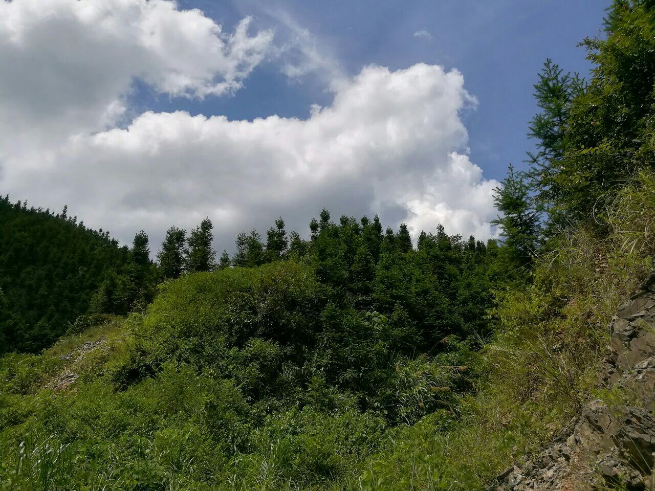 林场股权转让
