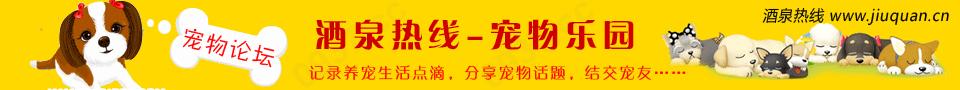 千赢国际|最新官网热线宠物论坛