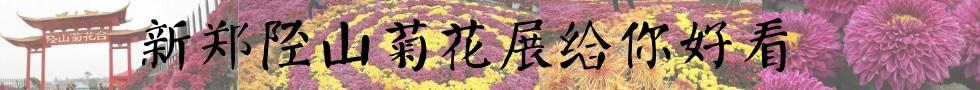 陉山菊花展