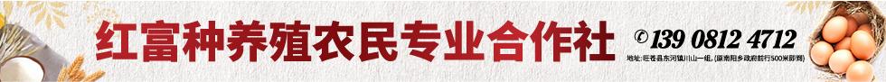 浙江仙居鸡旺苍川山养殖示范基地