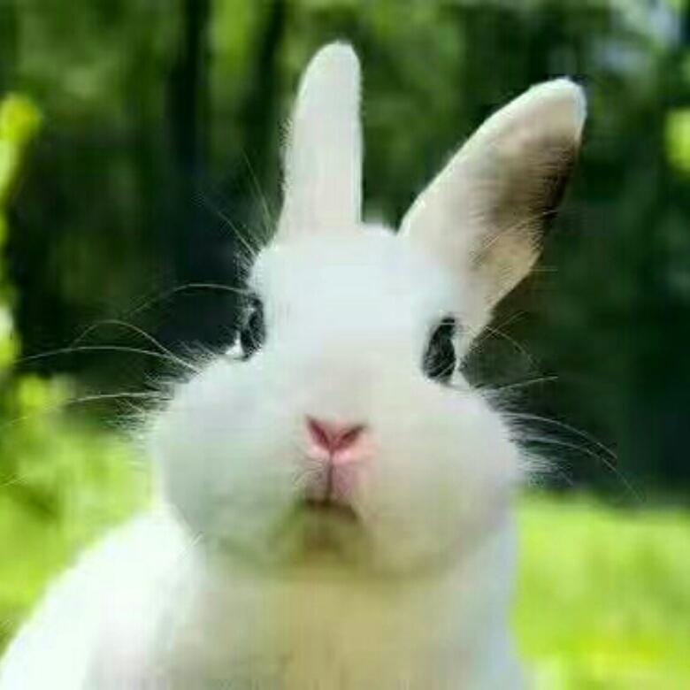 A*叮当兔