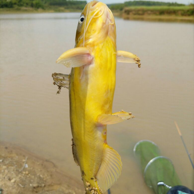 扛着竹竿去钓鱼