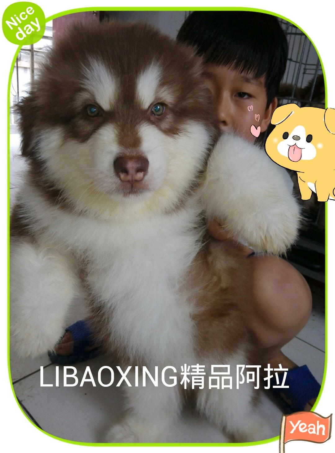 LIBAOXING