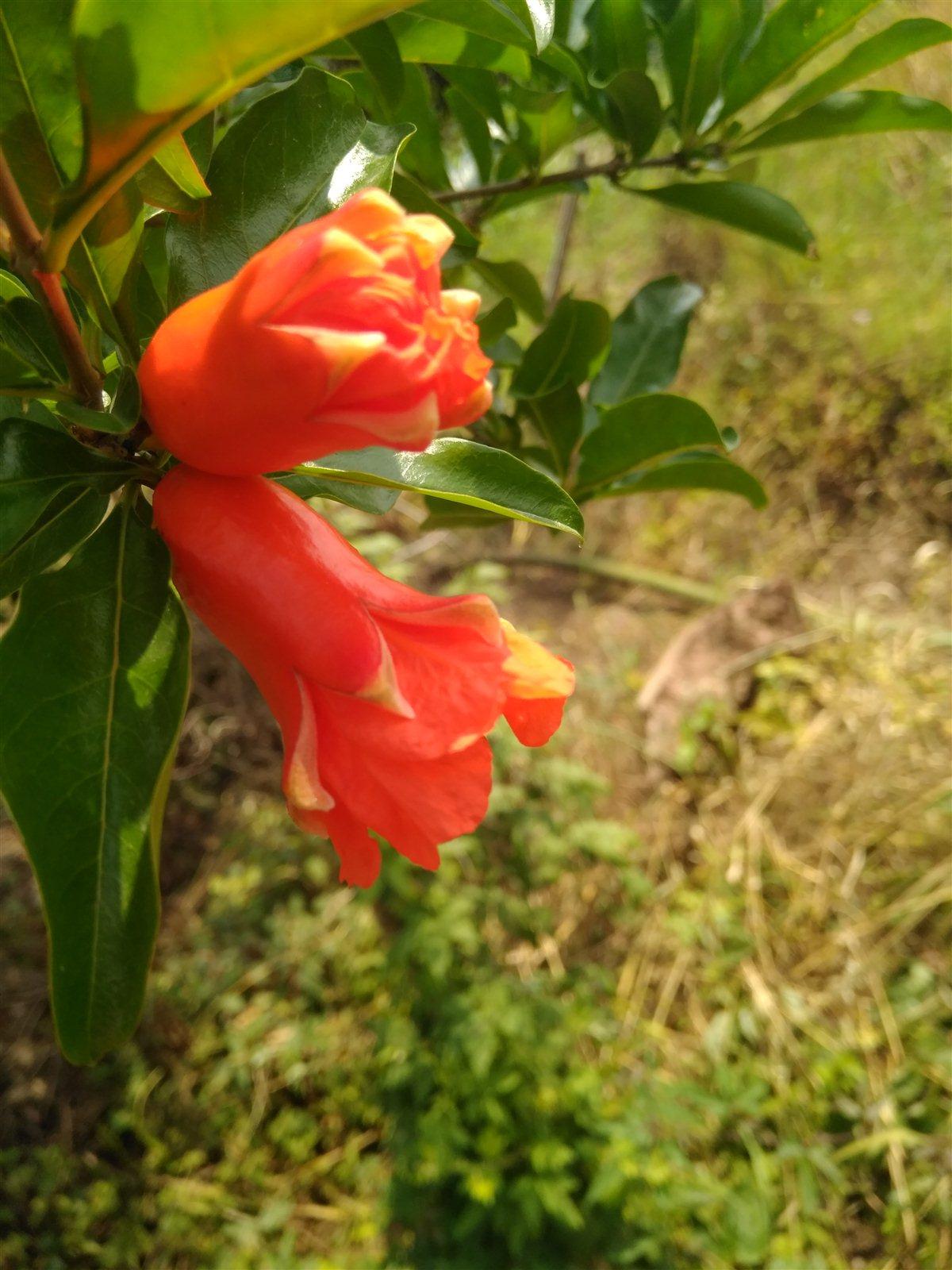 阳光中开花