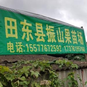 田东县振山果苗场