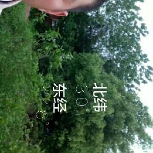 神仙豆腐15375181307