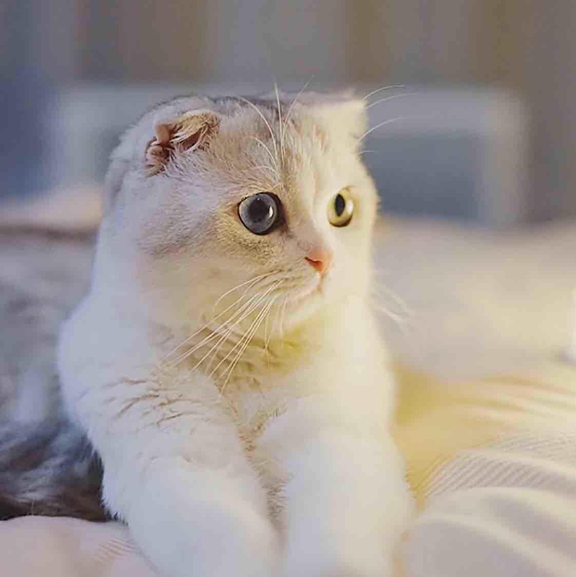 忧郁大脸猫