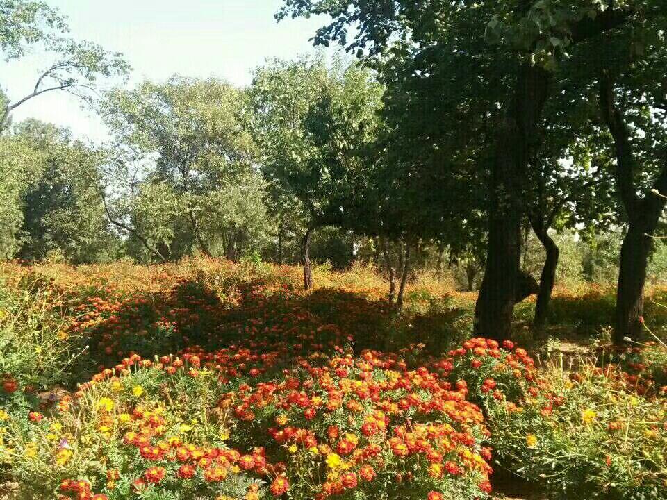 有你的秋天最美丽