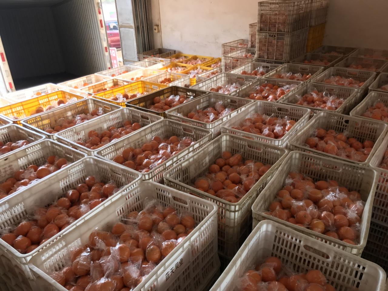 有寻乌赣南脐橙储藏果出售 批发10万斤左右