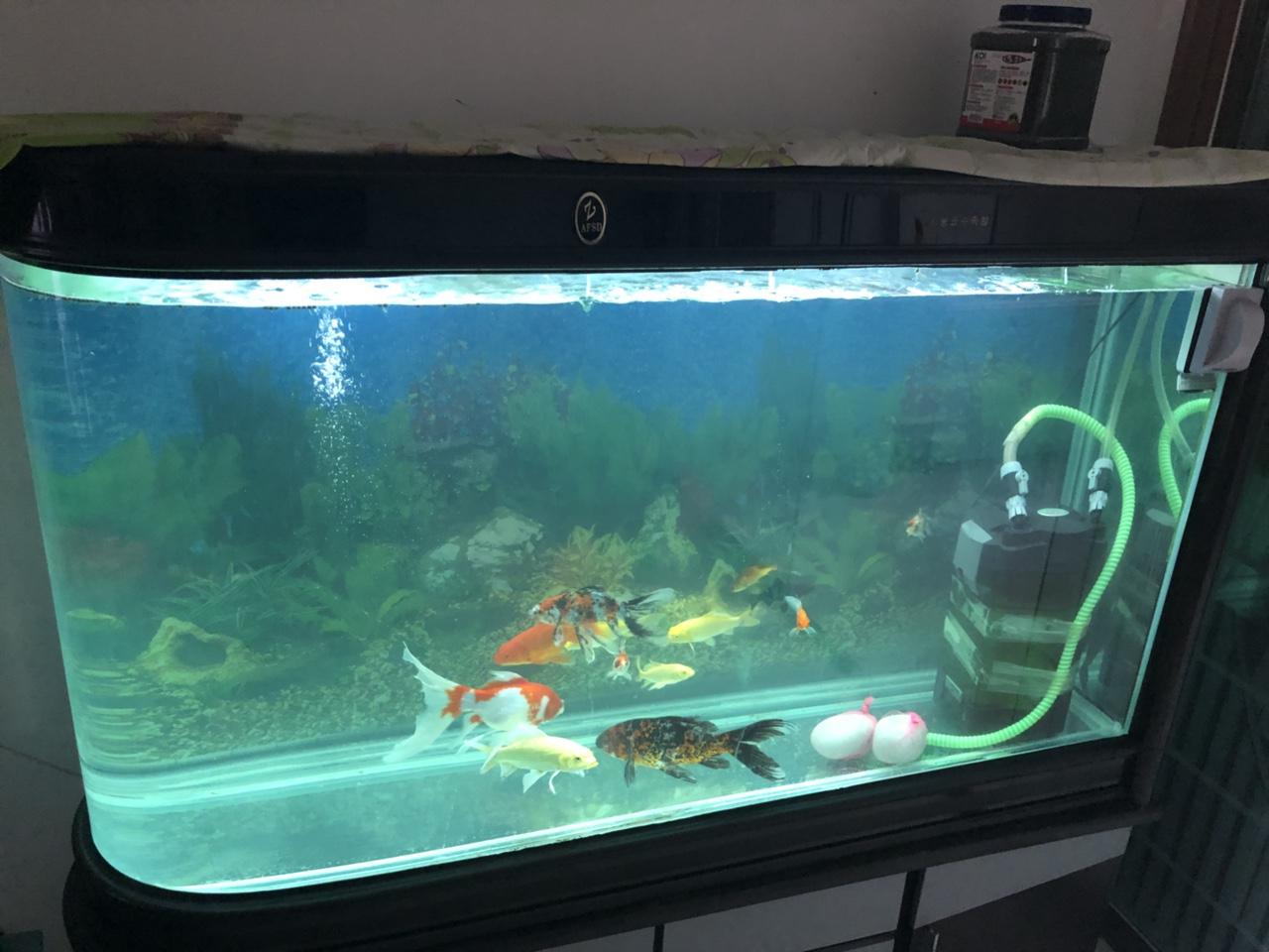 新鱼缸不断在家放着,有喜好的冤家可以联络我,新鱼缸买的时分8000千多,家里要搬迁以是出售了1400...