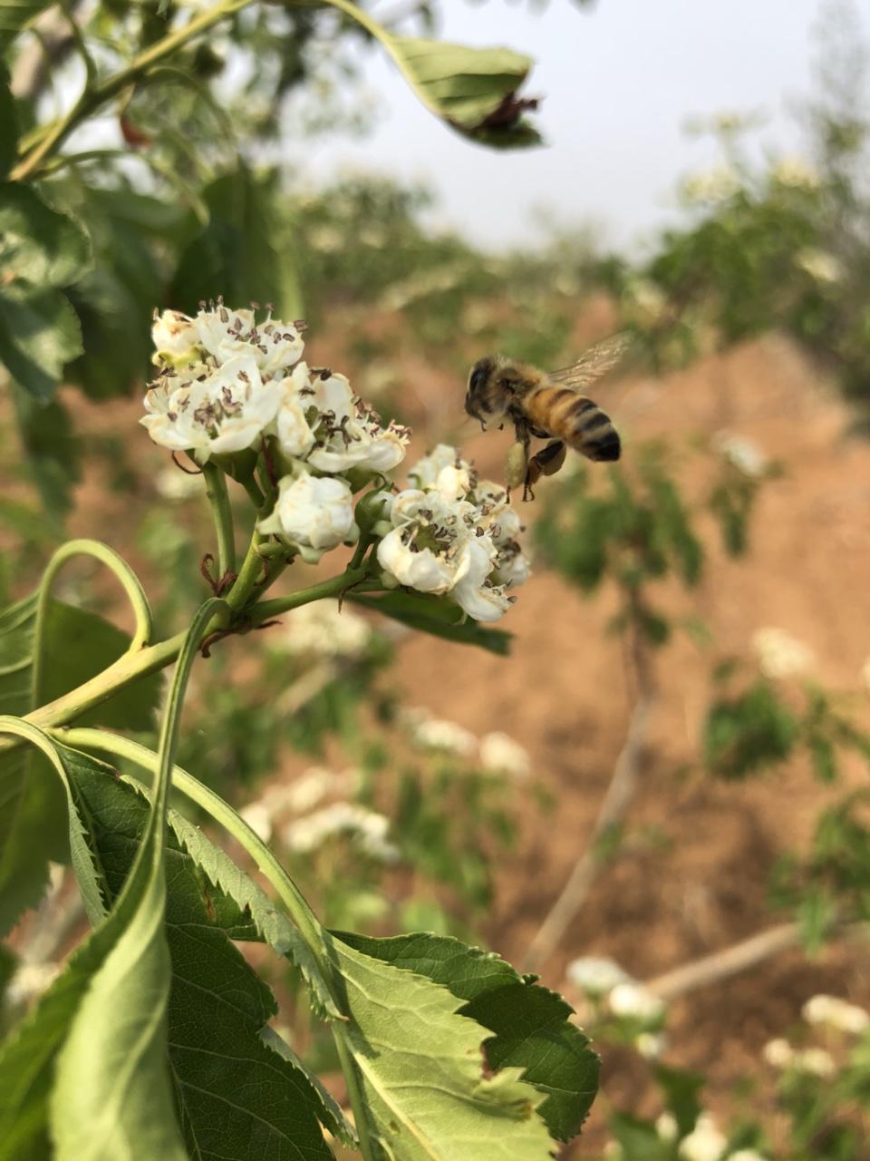 張家純種蜂蜜,無任何添加,假一賠十。