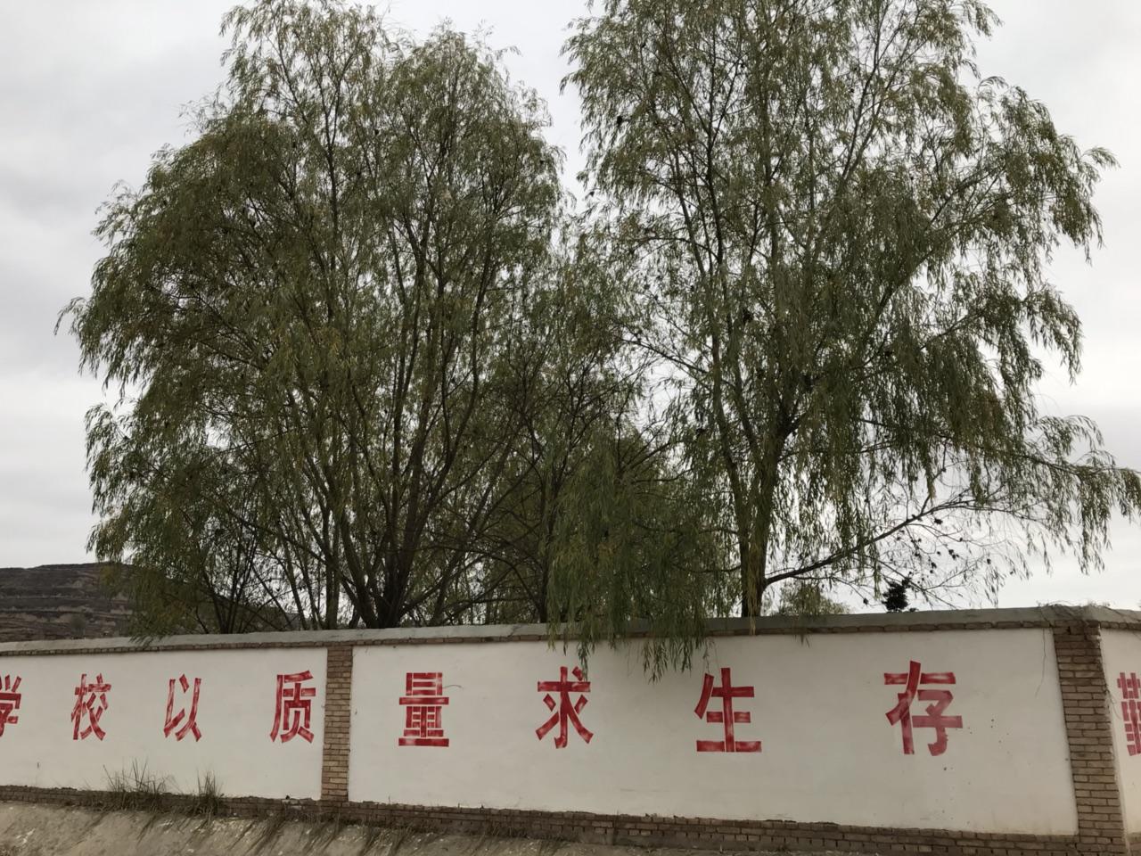 乡愁:秦腔巨星窦凤琴走后的马关庙湾村