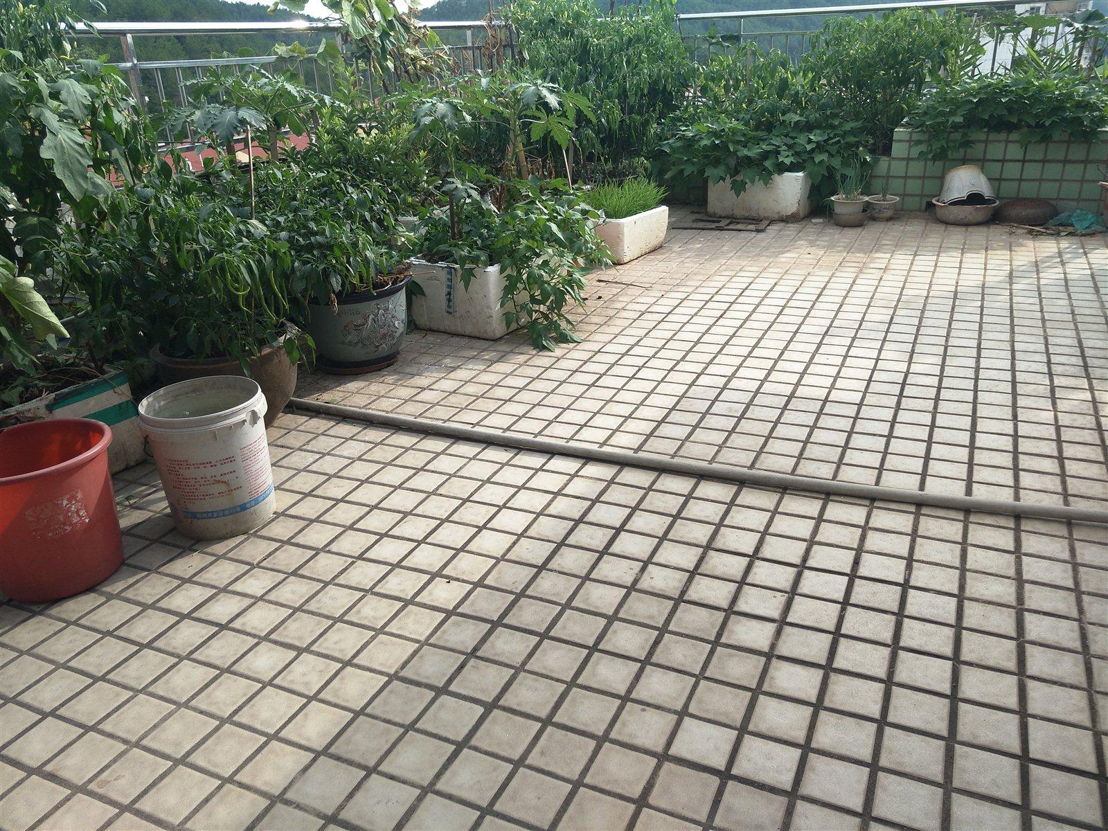 復式谷山花園5室送大平臺