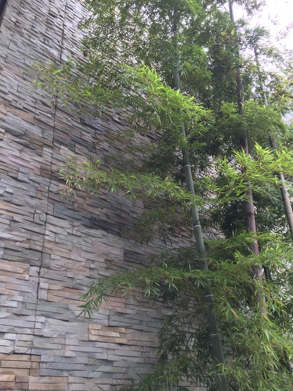 粗砺的石头配上修长的竹子很美,为什么我看