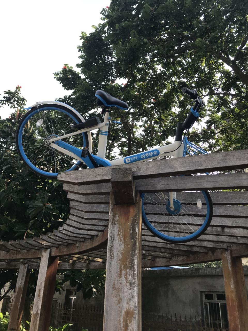 奇葩啊!上次共享单车被丢到万泉河,这回又被丢到走廊顶上了!