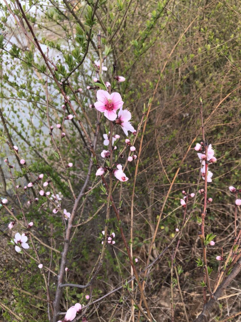 一朵桃花,细看你会发现什么?