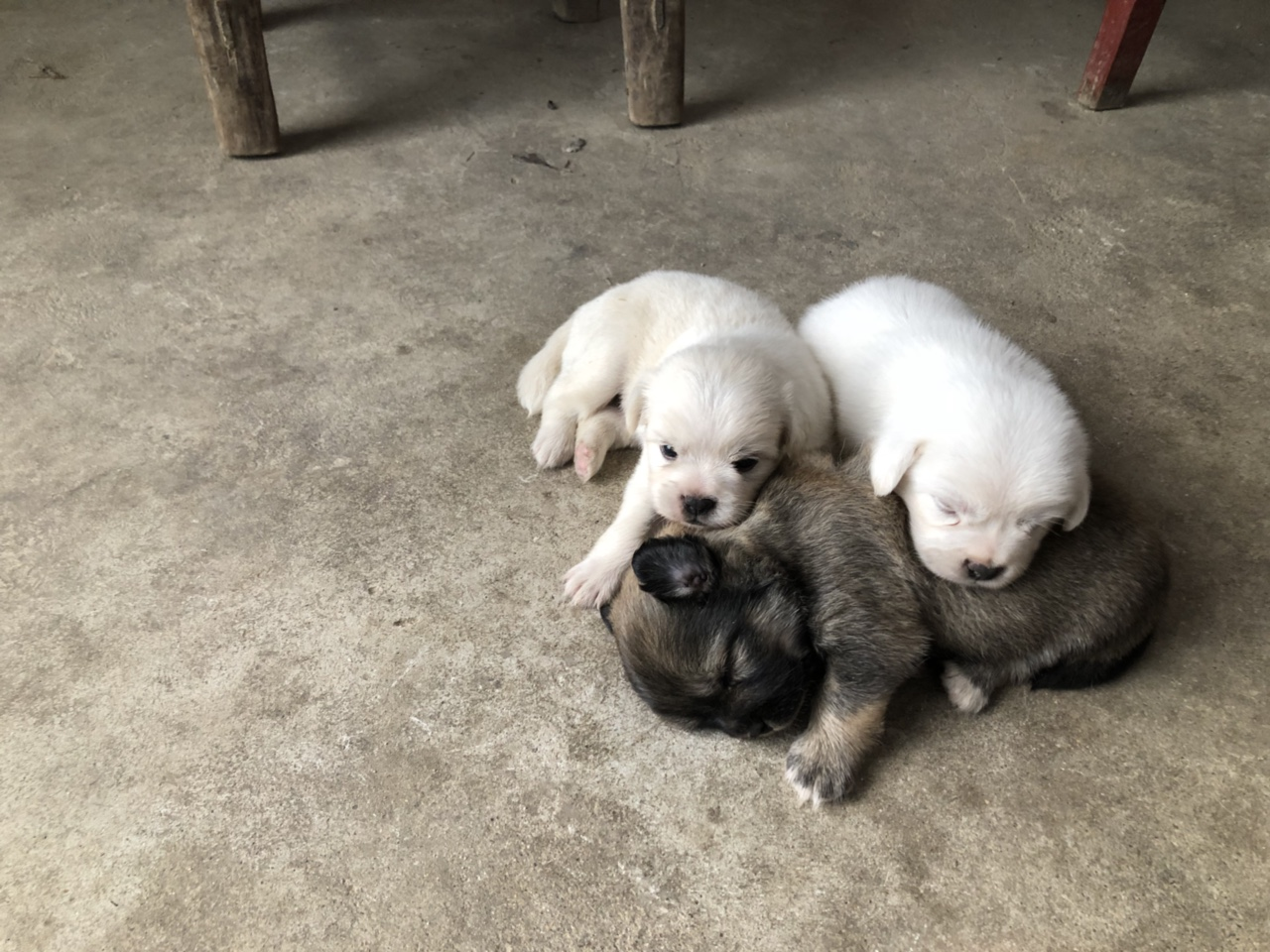 小奶狗求领养