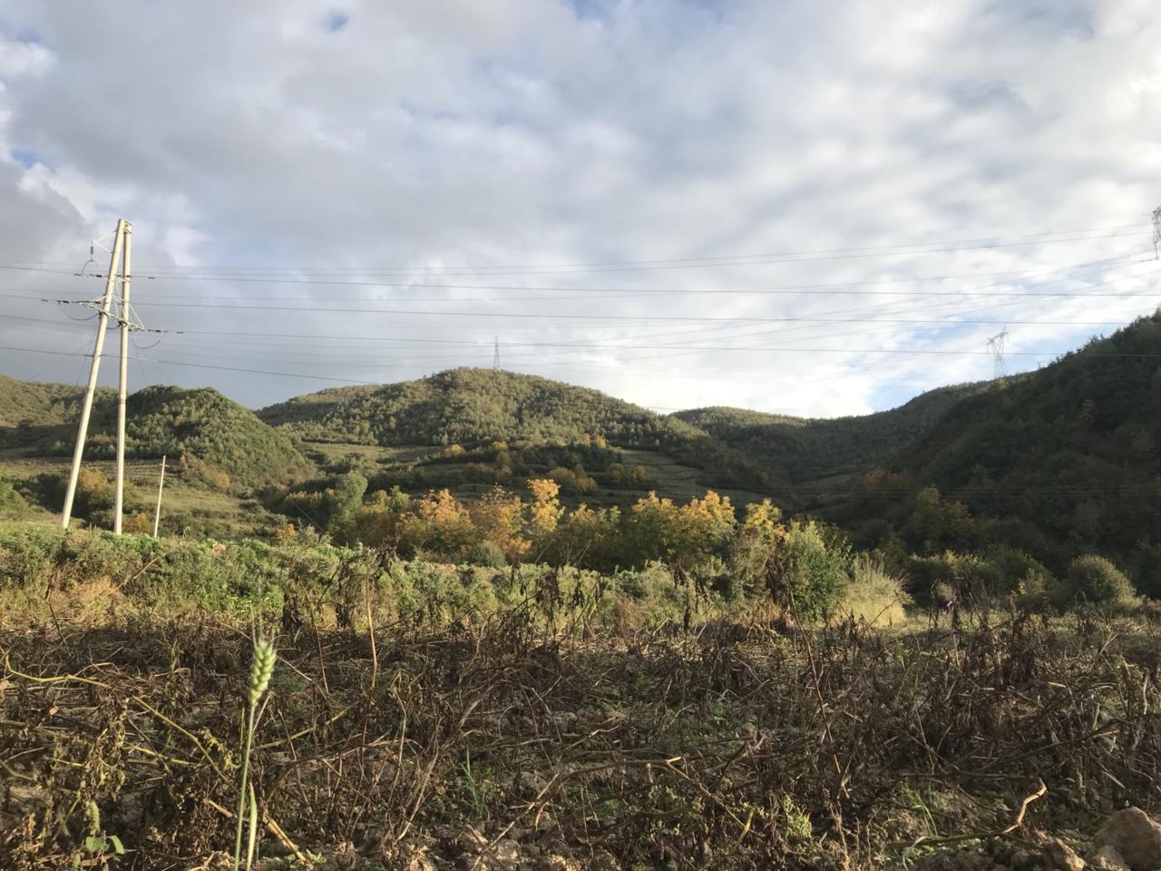 闫家神树村的两棵神树的传说谁知道?
