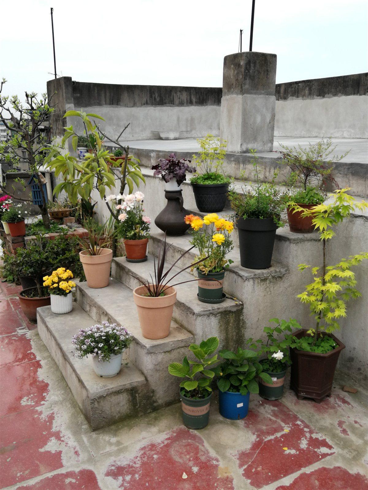 带花园的好房子!