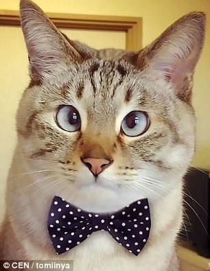 日本一只名叫Sol-kun的对眼猫日前走红网络,在Ins上拥有超过14万粉丝