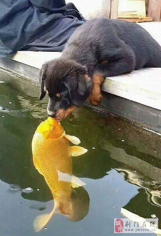 一条鱼儿的离奇故事,ps恶搞版!