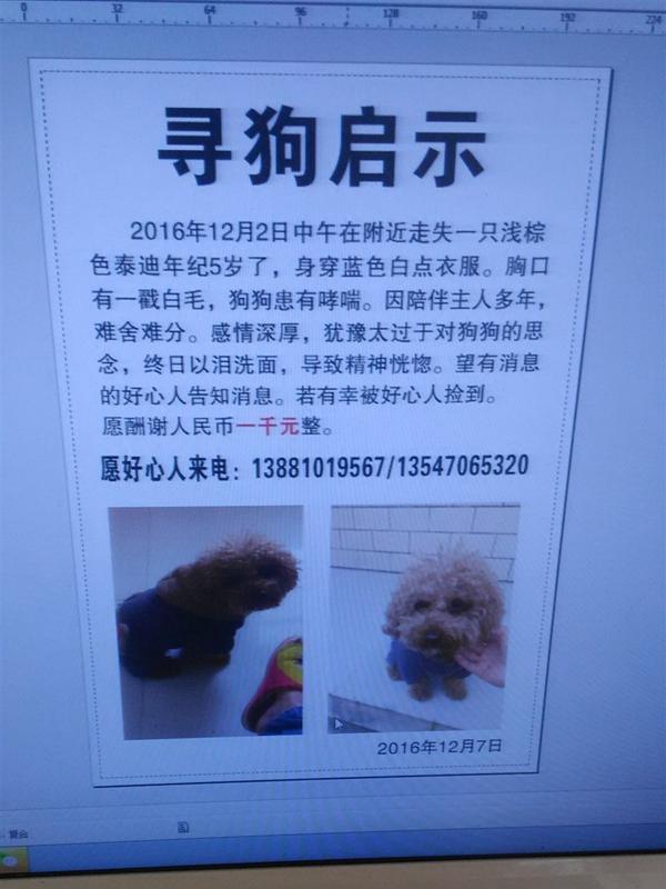 寻找走失的泰迪,12月2号上午1点左右在广汉南丰镇火炮厂背后丢失