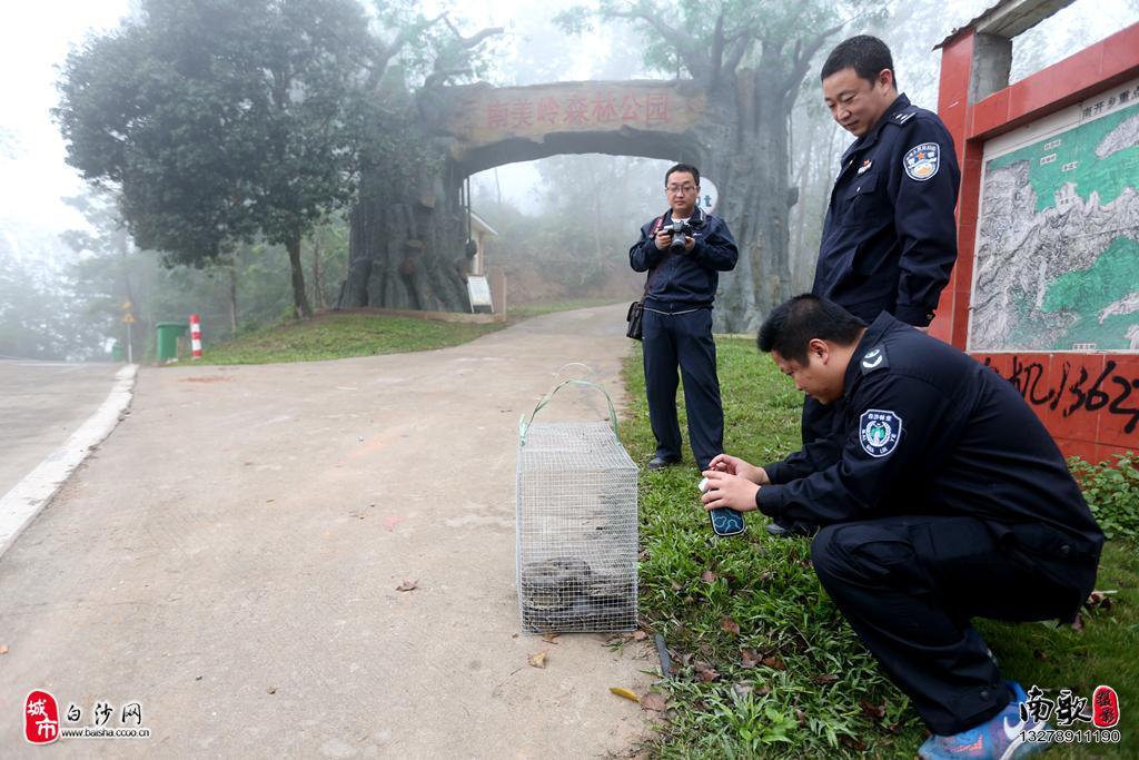 农妇务农时被大蟒蛇惊吓 白沙森林公安局民警放生