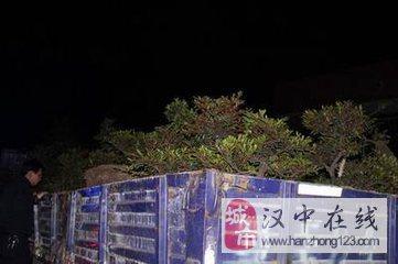 洋县108国道改建工程范围内严禁抢栽、抢种、抢建