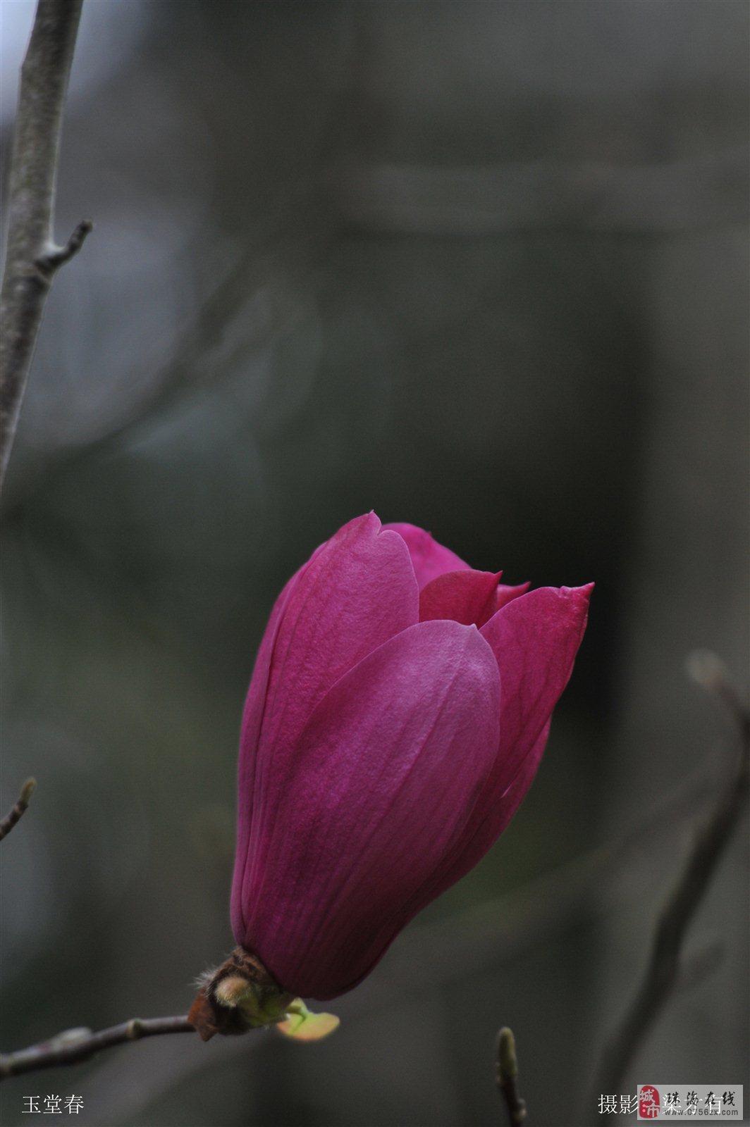 《花》你若盛开,蝴蝶自来――――摄于珠海度假村酒店园内