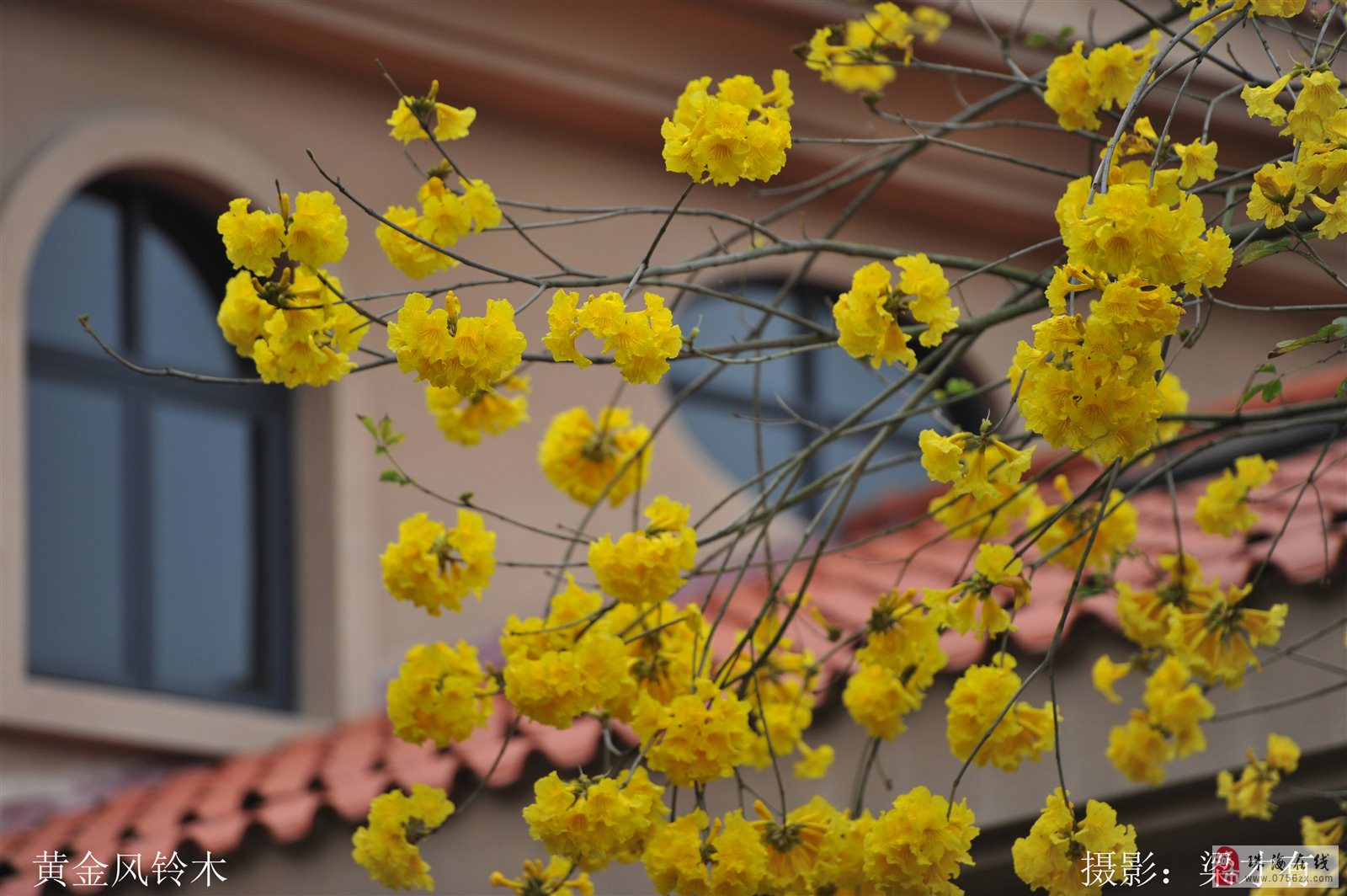 阳春三月,邀你来珠海度假村酒店赏花
