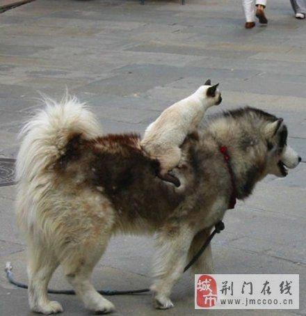 动物本性图片,你行它也行。