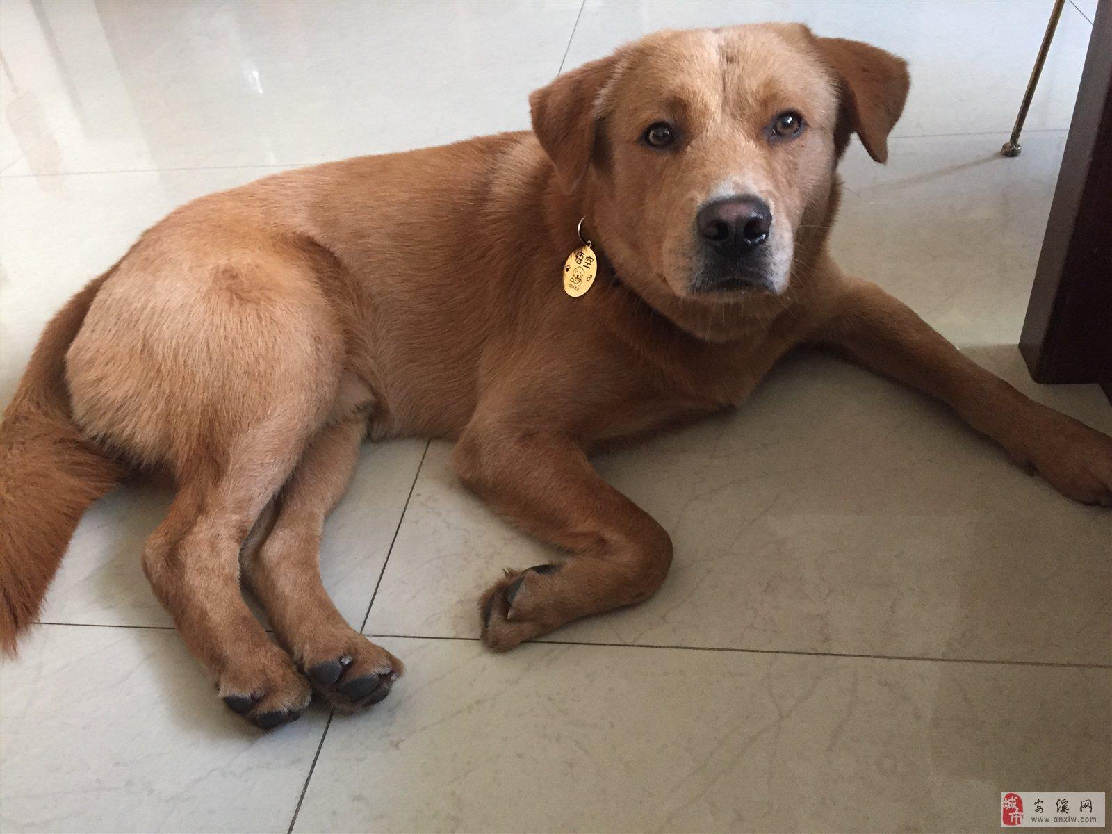 寻找爱犬,酬谢2000元