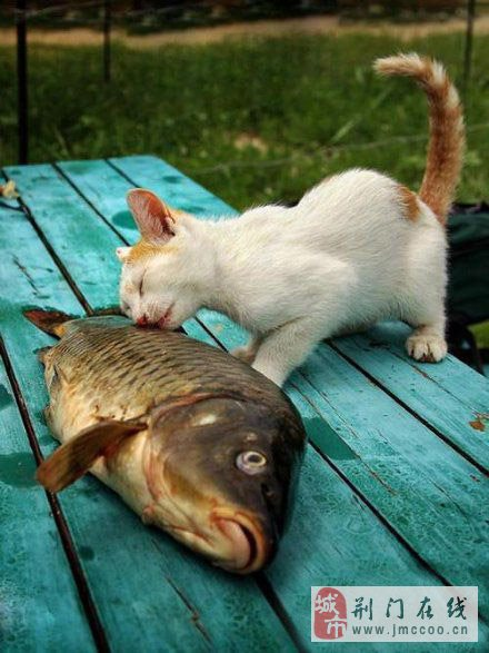 心有余而力不足的动物图片,发誓要干一番大事业的动物们!