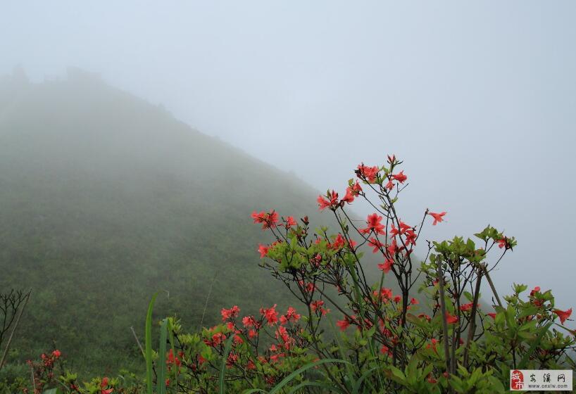 五阆山===雾之花!