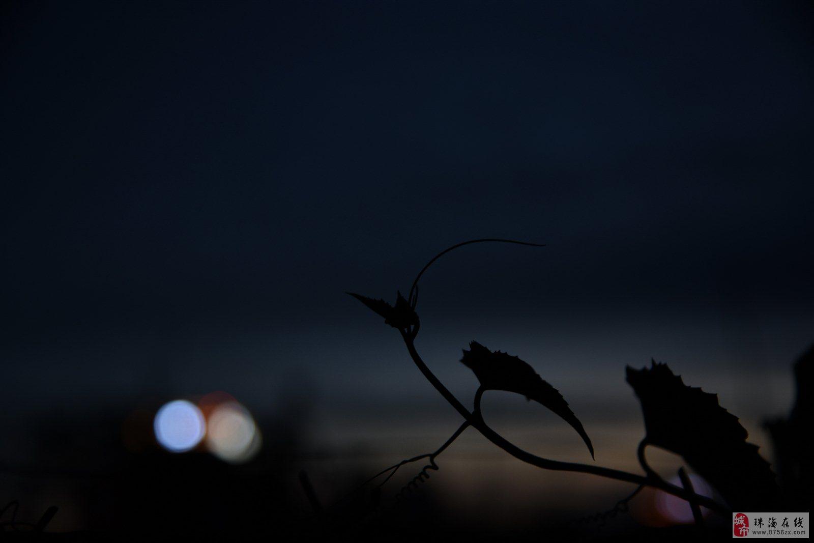 试新相机(尼康D750)