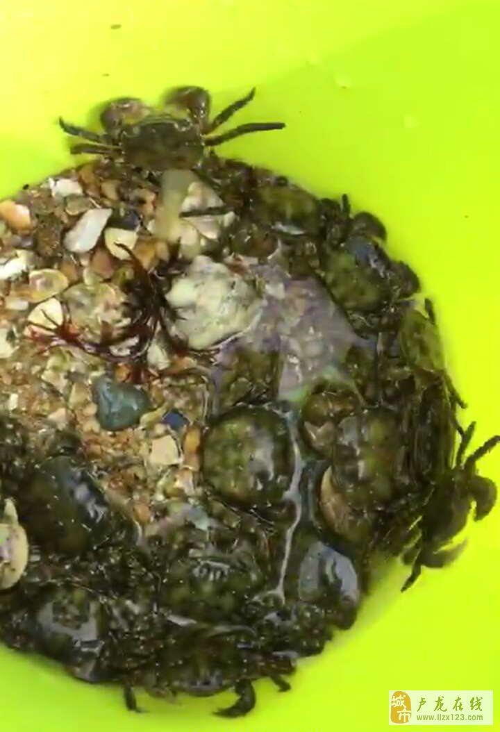 朋友去海边挖螃蟹了