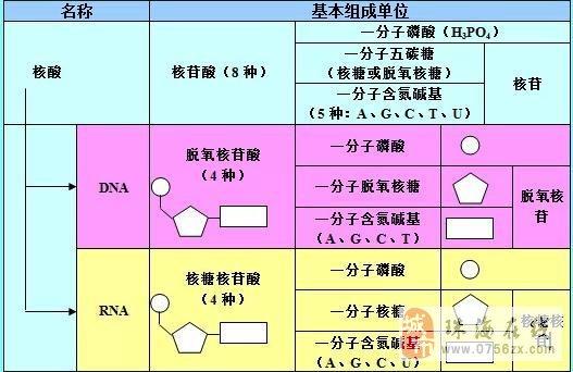 生物知识结构图最全汇总(一)