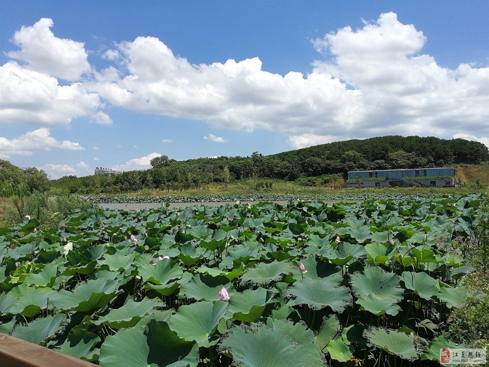 藏龙岛湿地公园手机随拍