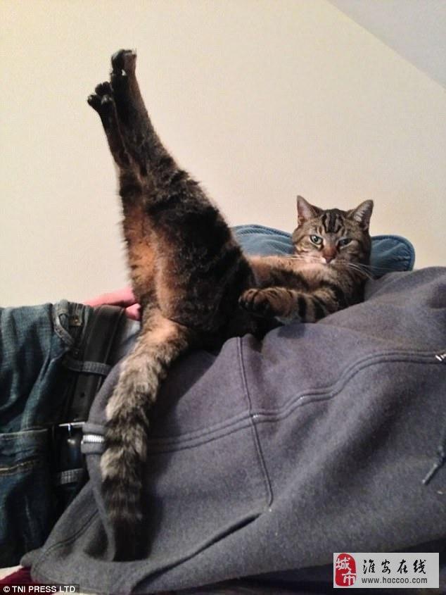 全身都是戏!猫咪们的搞怪日常