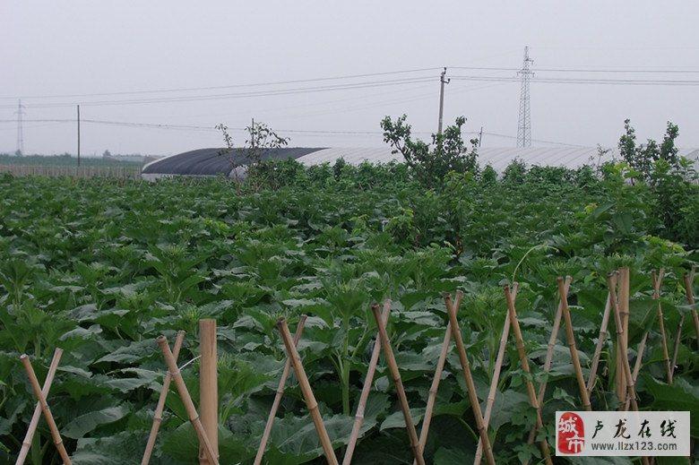 江南春.木井镇农业园区