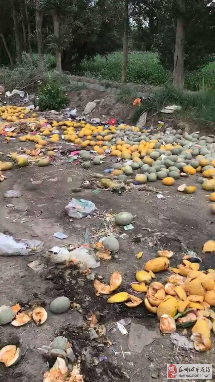 今年的瓜农啊,看看多少瓜都成了垃圾