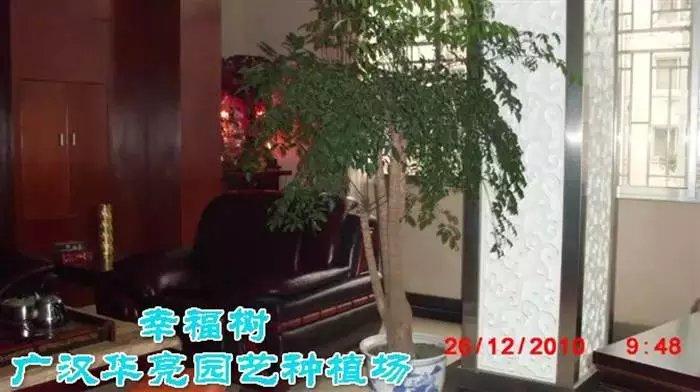 愿你像这绿色植物一样,一直幸福下去~~~广汉市华亮园艺种植场
