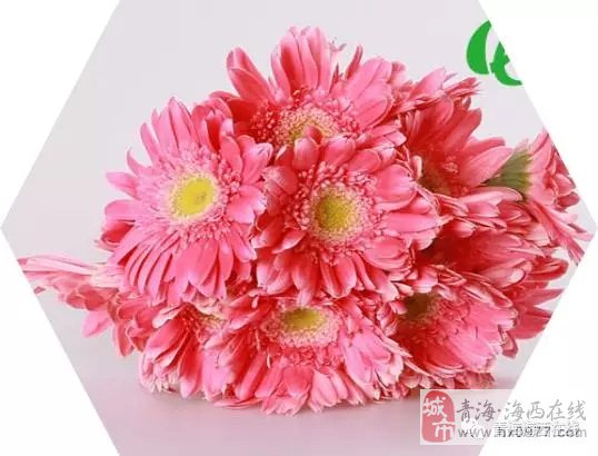 【鲜花抢购中】原价10元非洲菊 现价3.5元限时抢购!