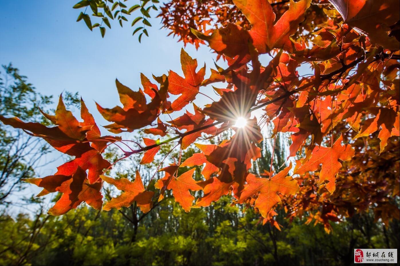 秋:待到满山红叶时!