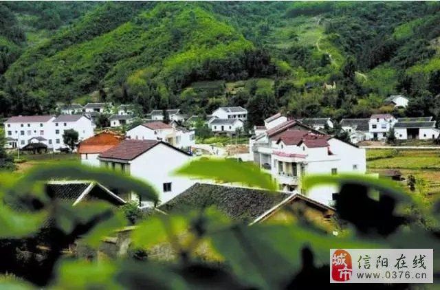 信阳农村最赚钱的项目出炉了,马上要有一大批人富得流油了...