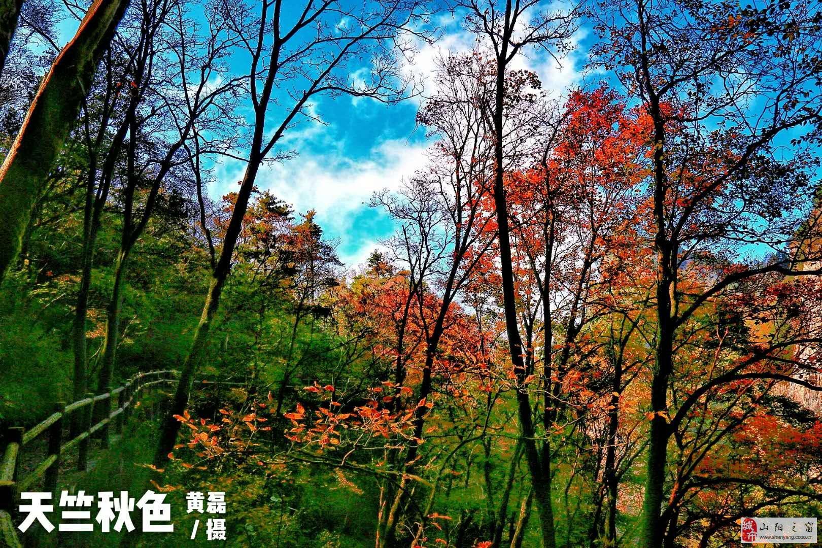 【组图】天竺山秋韵  没有比这更美的了!