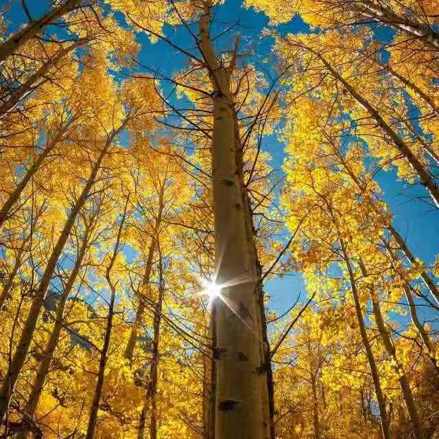 .・☆蝶舞�w�P☆・.