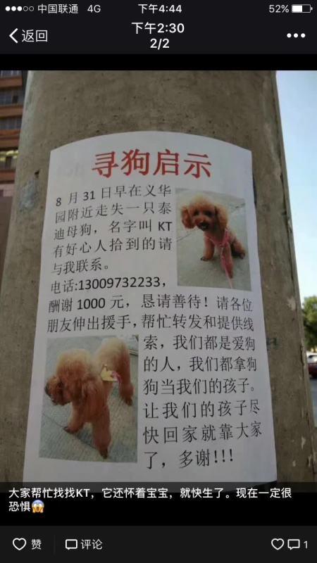 齐齐哈尔义华园附近走失泰迪母狗!酬谢1000!~