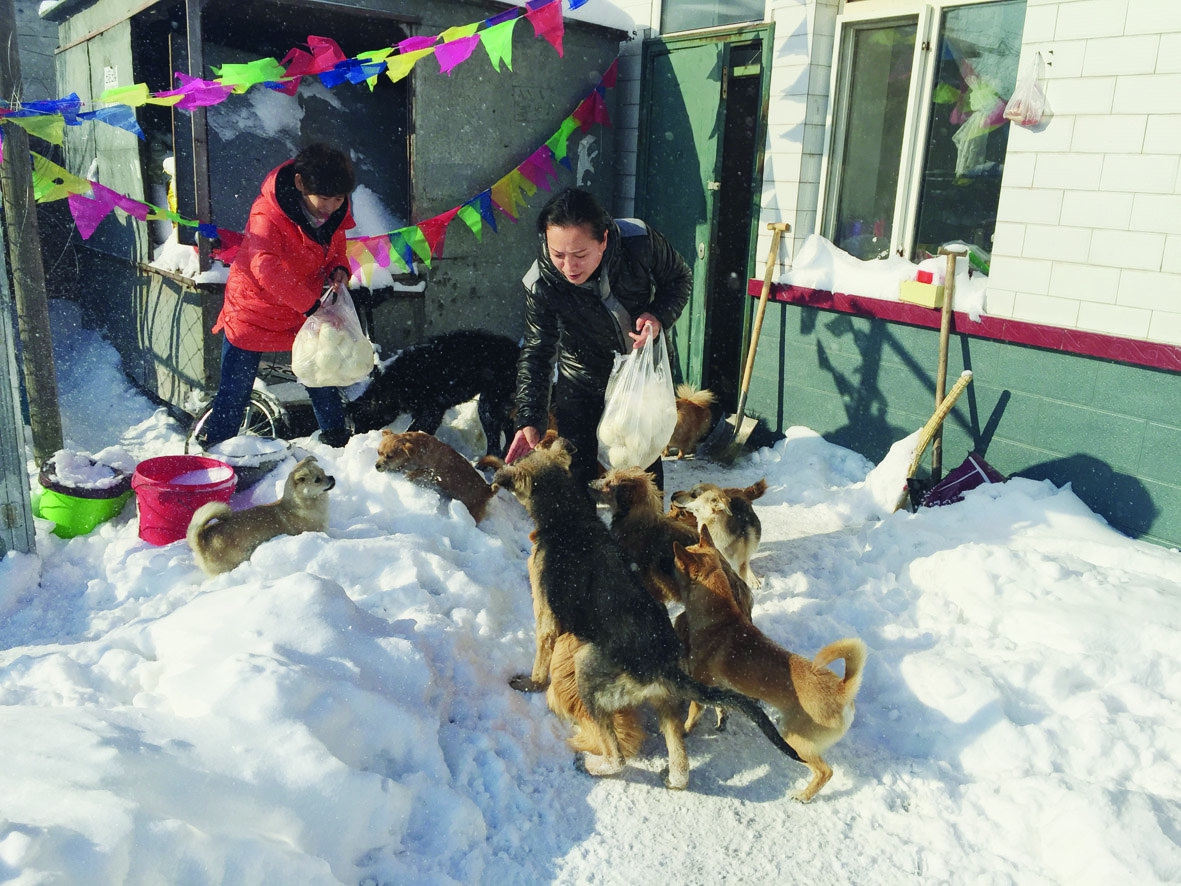 齐齐哈尔小动物保护协会联系电话:13846296466