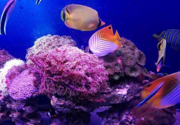 壁纸 动物 海底 海底世界 海洋馆 水族馆 鱼 鱼类 600_417